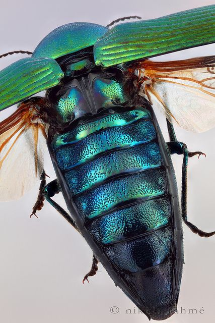 Dicas bets beetle 179523